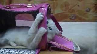 сумки для собак и кошек на ZooStar.com.ua