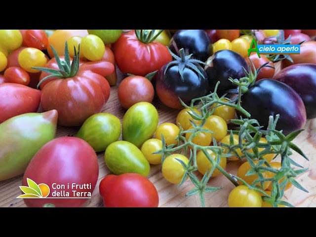 Puntata del 14/2/21 –  3° parte – Pomodori: sostenibilità in serra