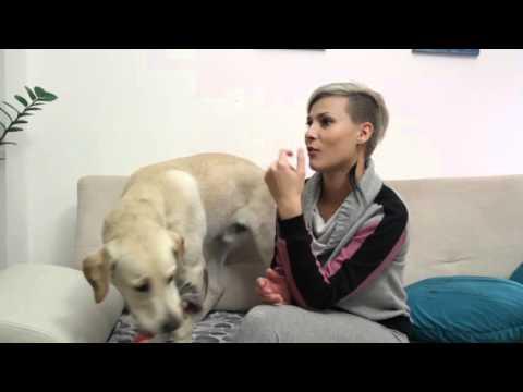 02. Prijateli - Sara Mejs i Labrador Retriver