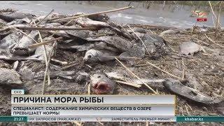 Специалисты озвучили причину замора рыбы на озере Питное