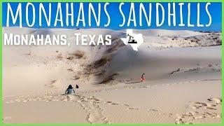 Monahans Sandhills | Texas State Parks