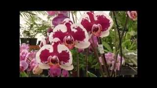 Amazing Orchids Tour - 20 Incredible Varieties in a Winter Greenhouse!!