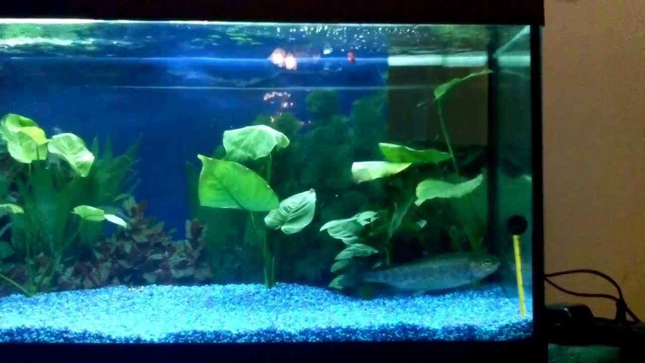 Trota in acquario da 100 litri youtube for Acquario 100 litri