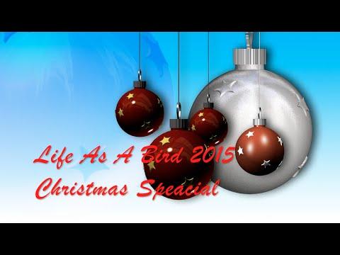 Life As A Bird Christmas Special 2015