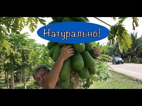 Как растет ананас в природе видео