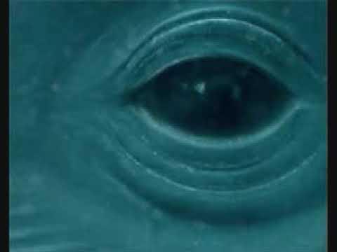 Frank Ocean-Blue Whale(Official Video)