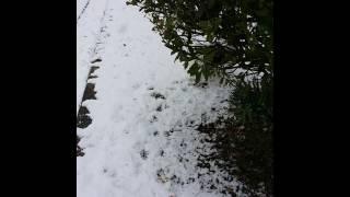 今年初雪です.