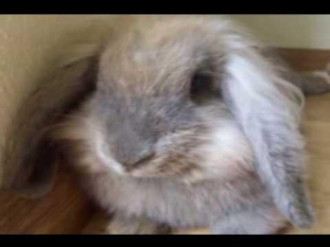 p.s. kwelwater zingt zijn konijnenlied