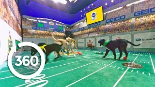 Pup's Eye View: Conclusion | Puppy Bowl (360 Video)