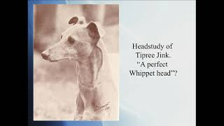 '100 Years of Whippet' for the UK Whippet Breed Council