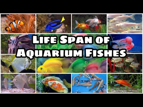 Life Span Of Aquarium Fishes