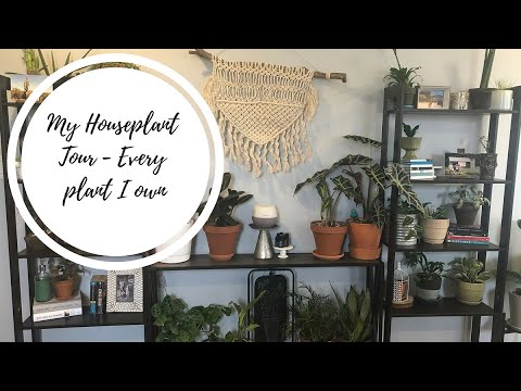 My Houseplant Tour! | Every plant I own.