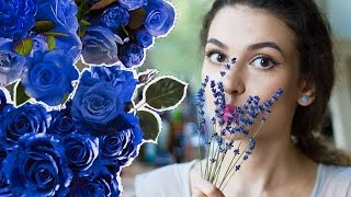 История лаванды в парфюмерии! Факты о лаванде в ароматах  Anisia Beauty