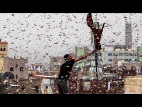 Locust invasion: 'Biblical' plague - YouTube