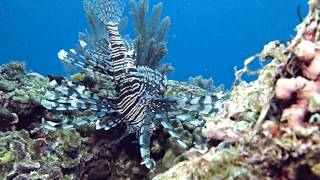 Diving Highlights from Manado / Bunaken - North Sulawesi, Indonesia 14-19 Oct 2011