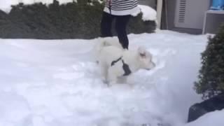 家のお庭で初めての雪遊びです。