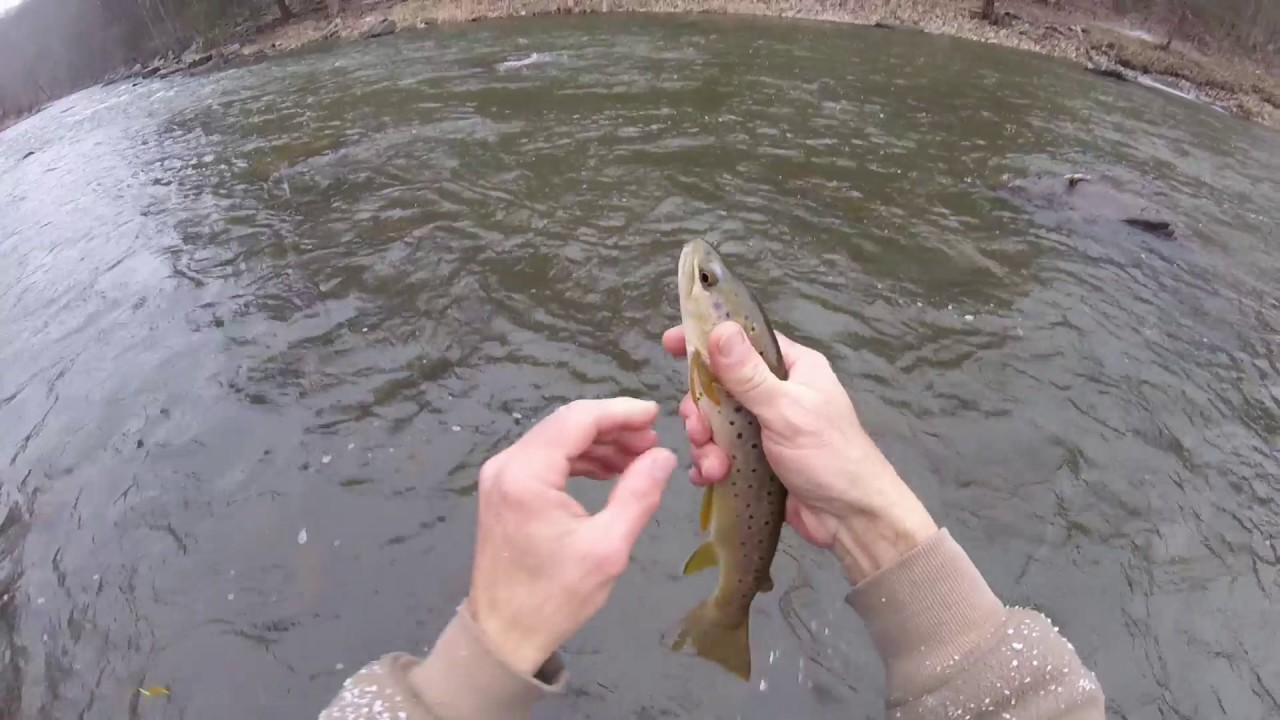 Penns creek is baaaack flyfishing january 2017 youtube for Pa fish for free days 2017