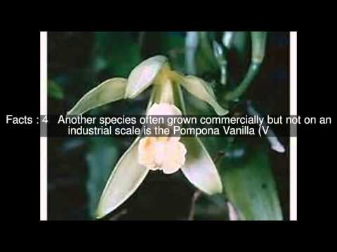 Vanilla (genus) Top  #7 Facts