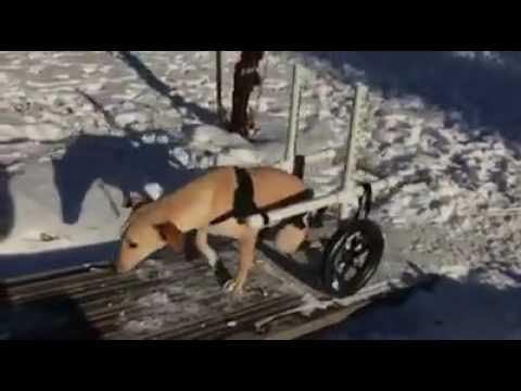 Habib - Zoe's Animal Rescue Society