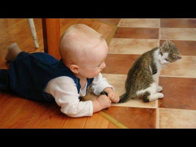「かわいい猫」 笑わないようにしようとしてください - 最も面白い猫の映画 365