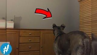 Anjing Ini Melihat PENAMPAKAN Aneh, Pemiliknya Pun Terkejut....