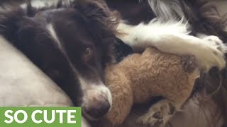 Dog cuddling with teddy bear will melt your heart