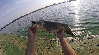 Ловля сома с берега/Ловля сома на кусочки рыбы/Днепр в августе 2017 (снято GoPro Hero Session)