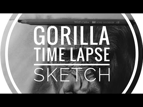 [Gorilla Daily Sketch] Time-Lapse 1 Hour Daily Carbon Pencil Sketch