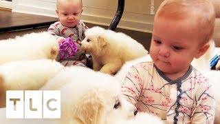 Babies And Puppies Cause Chaos In The Waldrop House! | Sweet Home Sextuplets