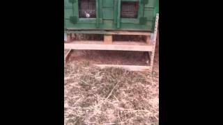 Outdoor Rabbit Hutches