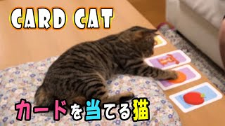A Cat Choosing The Correct Card カードを当てる猫【cute Cat】【まさかの】