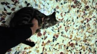 Кошка любит своего хозяина
