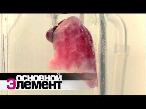 Вопрос: Как образуются организмы химеры?