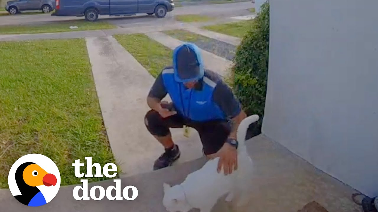 Download Cat Caught Greeting Delivery Drivers On Camera | The Dodo Cat Crazy