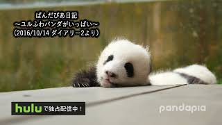 ぱんだぴあ日記|ぱんだ ねむい…ねむい…