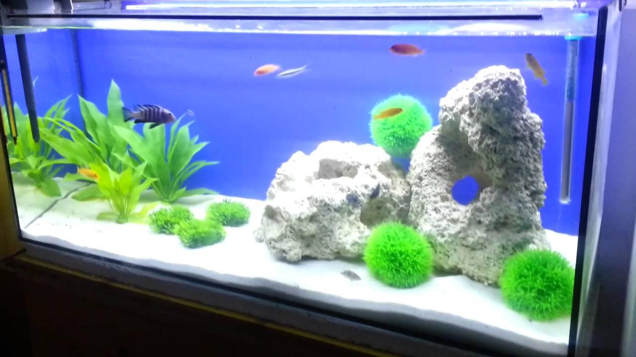 aquarium 100l africk cichlidy hapko66 youtube. Black Bedroom Furniture Sets. Home Design Ideas