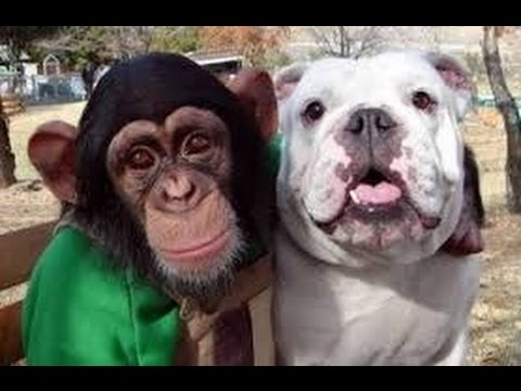 Monkey and Dog go shopping in Supermarket (HD) - Funny Show