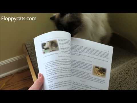 FREE eBook Copy of A Ragdoll Kitten Care Guide March 5-9 2014 - ねこ - ラグドール - Floppycats