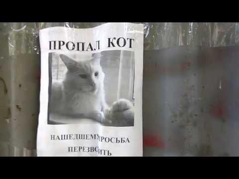 No, este gato ni está dentro del cartel ni te está mirando, pero sigue siendo inquietante
