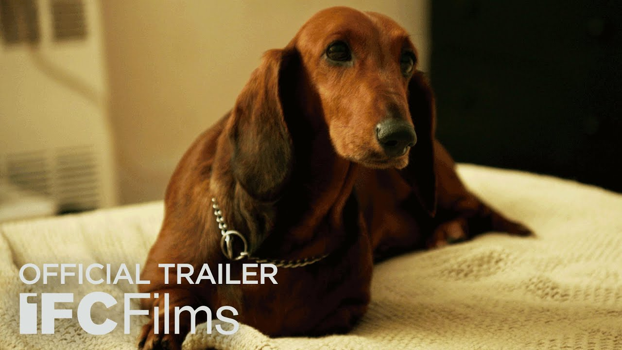 Watch Wiener Dog