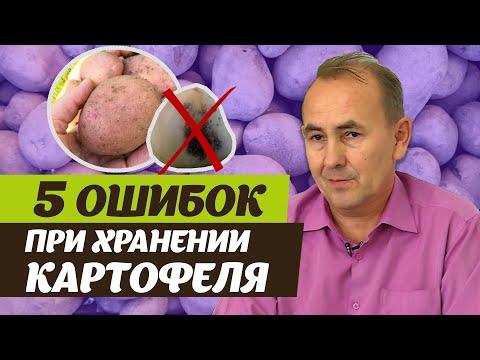 Как правильно хранить картофель. Советы специалиста
