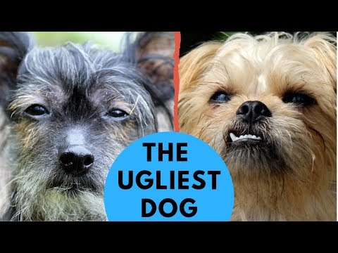 What are the Ugliest Dog Breeds? ROCADOG QNA 5