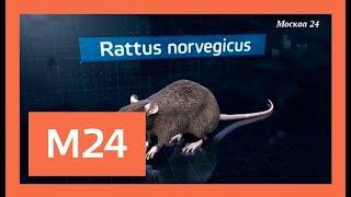 Московские крысоловы