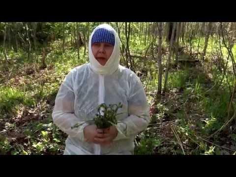 Папоротник растение полезные свойства и применение