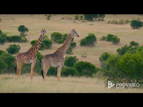 Teaser Masai Mara Wildlife