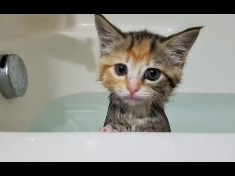 Kitten's First Bath | Innocent Kitty Taking Bathing For the First Time