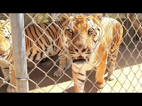 Wildlife Waystation Private Tour