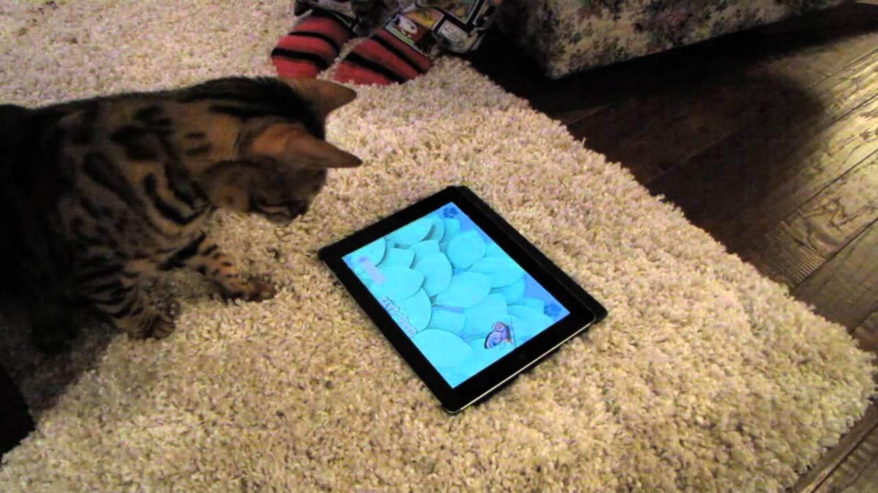 does catnip affect humans