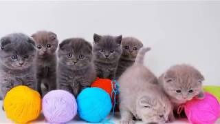 Детская песенка - Считалочка котят (клип)