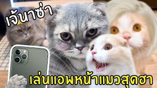 นาซ่าชวนซิมบ้าเล่นแอพหน้าแมวสุดฮา!!